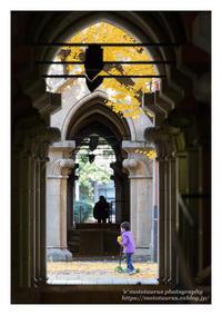 銀杏の楽しみ - ♉ mototaurus photography
