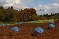 ピーナッツ畑秋の成田空港#4 - 飛行機写真 ~旅客機に魅せられて~