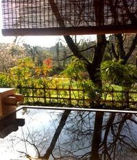 12月のお花見露天♪ - 金沢犀川温泉 川端の湯宿「滝亭」BLOG