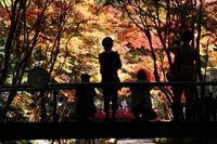 小国神社の紅葉・2♪ - happy-cafe*vol.2