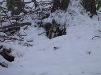 高跳びをしてから雪の中へ。 - ヒロムシ君のお散歩日記