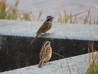 今日の鳥さん181122 - 万願寺通信