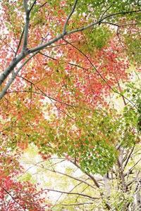 日本の秋 - + anything goes +