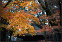 平林寺 -3 - Camellia-shige Gallery 2