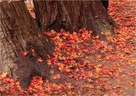 ☆香嵐渓・名残りの紅葉☆ - 気ままなフォトライフ