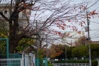 スナップ   街の木々残り葉 - エンジェルの画日記・音楽の散歩道