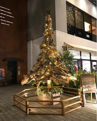 みなとみらいのクリスマスツリー巡り🎄 - ぶーさんの日記 2