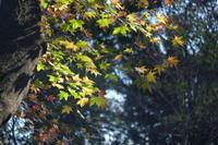 森が華やぐころ・・・ - aya's photo