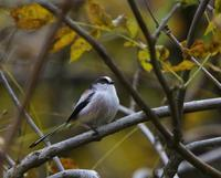 冬鳥が少ない、、 - ぶらり探鳥