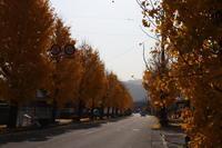 冬師走です!黄金ロード - 萩セミナーハウスBLOG