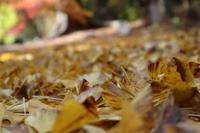 冬師走です。紅葉 - 萩セミナーハウスBLOG