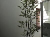 50日目家は大きな木WEB家づくりセミナー - noanoa laboratory
