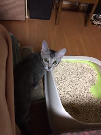 猫 - リラクゼーション マッサージ まんてん