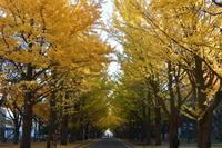 """2018年11月『深秋、札幌』November 2018 """"Late Autumn, Sapporo"""" - 小林皮膚科クリニック 院長ブログ"""