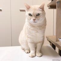 画像はイメージです - 賃貸ネコ暮らし|賃貸住宅でネコを室内飼いする工夫