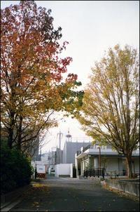 京都タワー - のっとこ