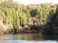 ほんとに12月? - 千葉県いすみ環境と文化のさとセンター