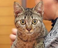 お見合い成功。 - 八幡地域猫を考える会