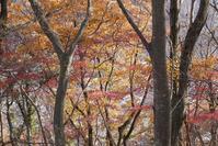 12/2高川山からむすび山(ふもと近くの紅葉を期待して) - そらいろのパレット