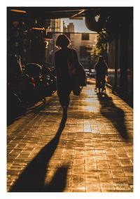 夕日に向かって - ♉ mototaurus photography