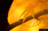 紅葉シーズン終了 - 小豆島PHOTOGRAPH(ココロで感じる写真・ココロの目を開眼!)
