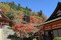 高野山と紅葉の奈良3社寺を見にいく旅 <後編>談山神社・長谷寺・室生寺 - ニッキーののんびり気まま暮らし