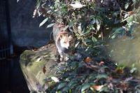 ホンドギツネのコウシロウ - 動物園へ行こう
