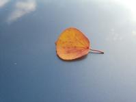 空に舟うかべ… - 侘助つれづれ