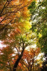 11/22~25、伊豆・山梨旅行、その3:「出会い橋」の紅葉と御宿さか屋 - 某の雑記帳