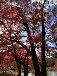 府立植物園 もうすぐクリスマス🎄 - 京都西陣 小さな暮らし