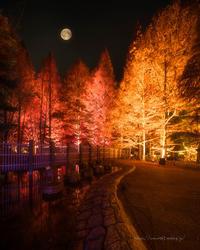 月夜☆ - ぽとすのくずかご