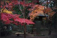 平林寺 -4 - Camellia-shige Gallery 2