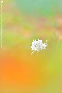 琴線 - お花びより