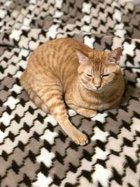 テクテクぶらり⑥ - 愛犬家の猫日記
