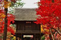 2018平林寺の紅葉-1 - 自然と仲良くなれたらいいな2