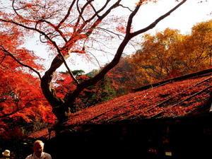 京都へ Ⅱ -