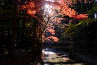 小國神社紅葉#4 - 長い木の橋