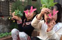 ラディッシュを収穫☆ - *Smile Handmade* ~スマイルハンドメイドのブログ~