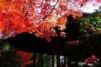紅葉狩り - kogomiの気ままな一コマ
