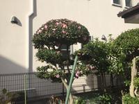 今日の庭 - わたしの好きな物