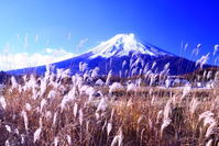 30年11月の富士(27)農村公園の富士 - 富士への散歩道 ~撮影記~