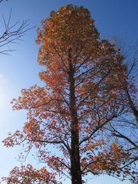 遠のく青空と最後の紅葉 - タビノイロドリ