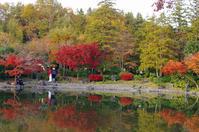 昭和記念公園紅葉9 - 生きる。撮る。