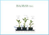 バオバブの本『BAOBAB TRIO』 - マリカの野草画帖