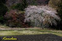 茶臼山高原へ1 - カンちゃんの写真いろいろ