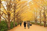 黄葉の昭和記念公園 - barbersanの野鳥観察