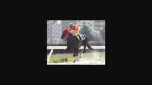 オールドルーキー、ラホーヤノキセキ/今週 阪神JF2018.12/6 - 馬主クラブの研究