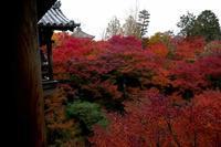 思いたったら吉日 紅葉狩りに♪ - Colorgrace::Blog
