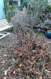 庭作業と金柑ピール - うまこの天袋