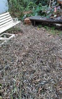 庭作業(掃除?) - うまこの天袋